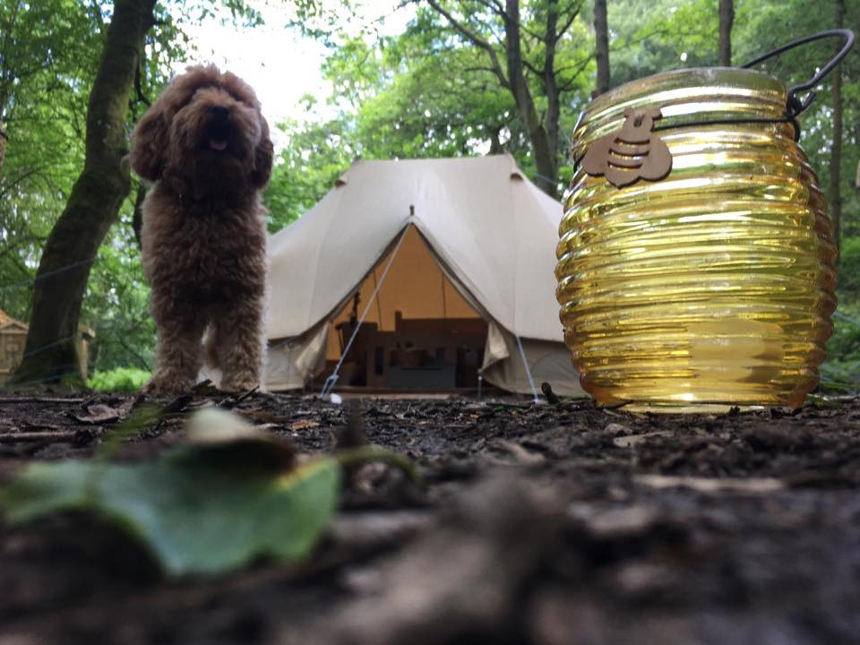 Secret Wood Glamping