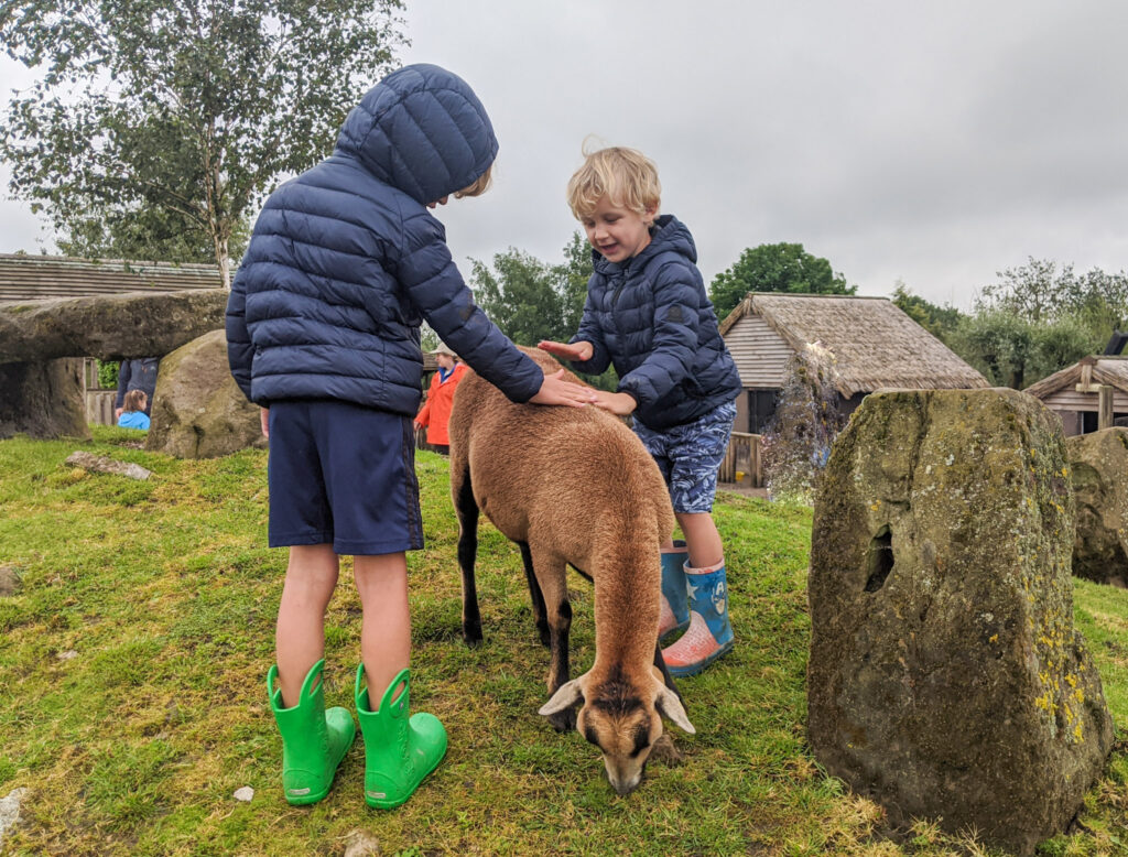 patting a sheep at Peak Wildlife Park