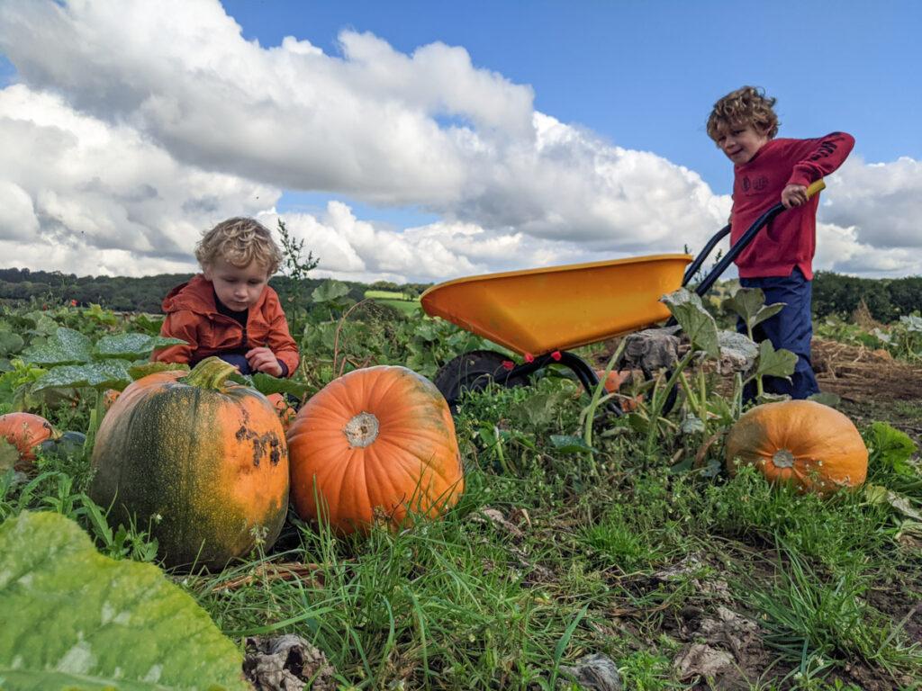 Village Logs pumpkin picking