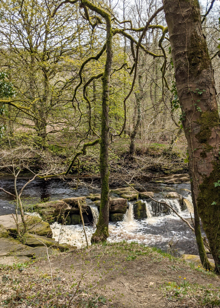 small waterfall on River Derwent