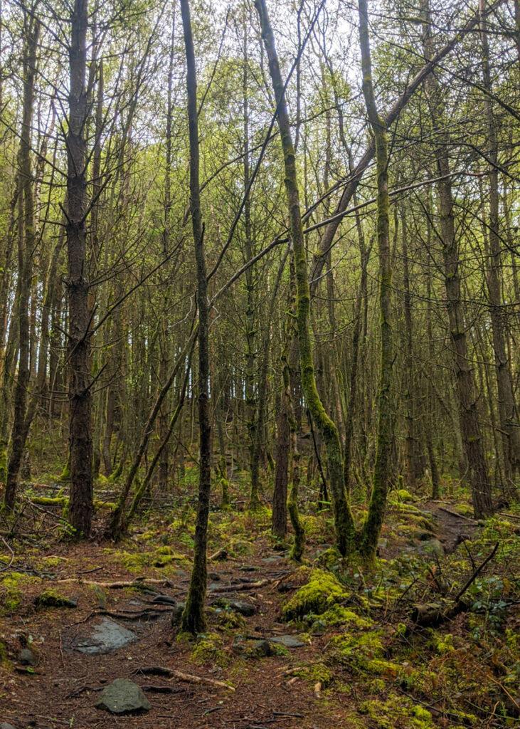 Beeley woods walk